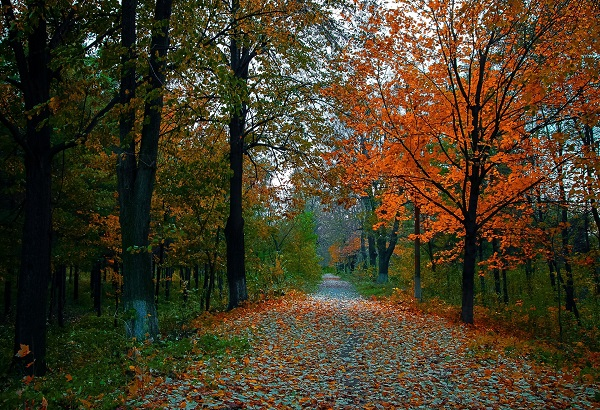 polska-złota-jesień-spacer-po-parku